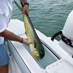 Regulator 23 Fishing