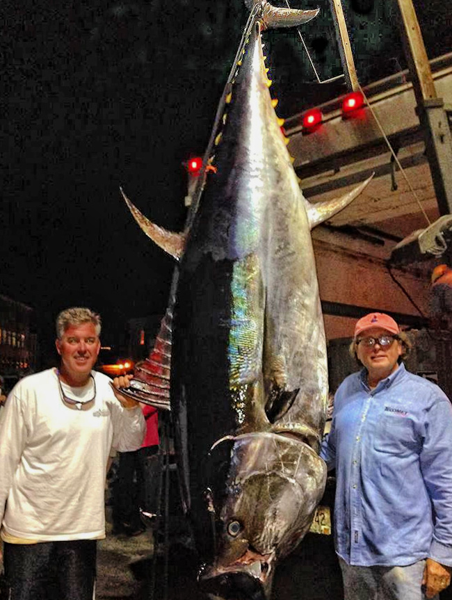 two men with giant bluefin